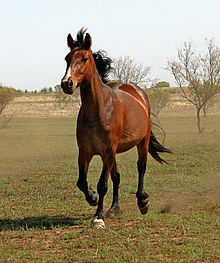 Image of a Bucking Bronko Horse